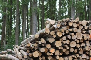 Carbon Neutrality of Biomass